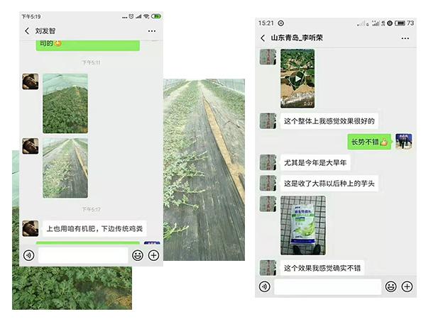 大棚蔬菜客户反馈.jpg