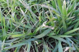 小麦施肥用大.jpg
